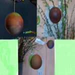fertige-eier