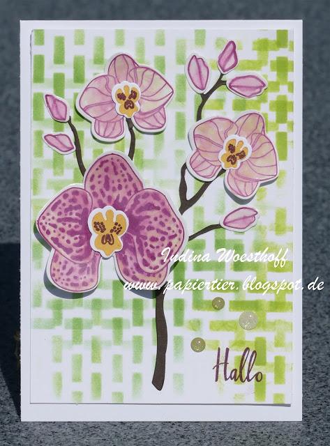Orchideenzweig